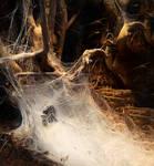 web cave 2