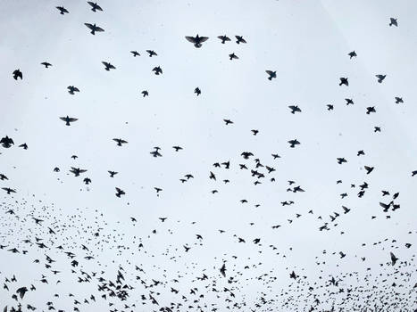 flying birds 3