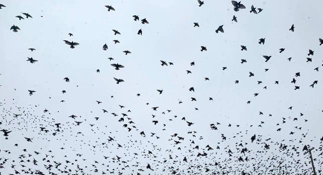 flying birds 4