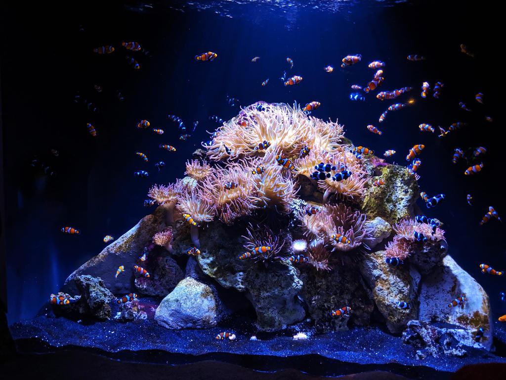 fish 13 by yellowicous-stock