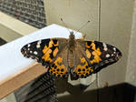 butterfly 2 by yellowicous-stock