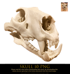 skull 10 png by yellowicous-stock