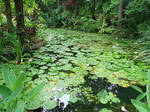 lilypads 4 by yellowicous-stock