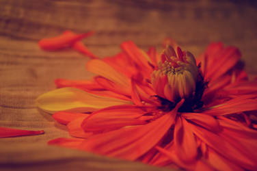 Fleur Partielle by ColourburstTEY