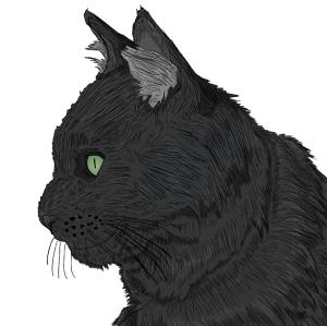 the-black-catt's Profile Picture