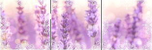 Lavender Aesthetic Dividers