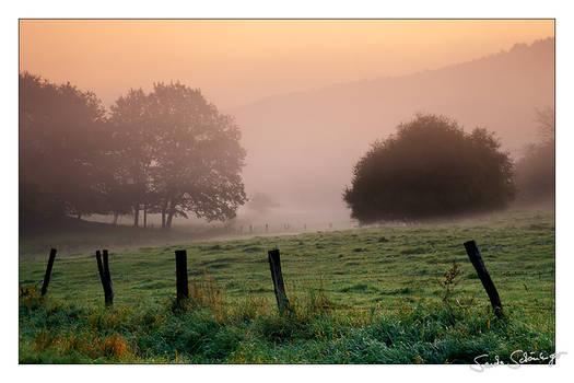 The Dawnbirds Sing