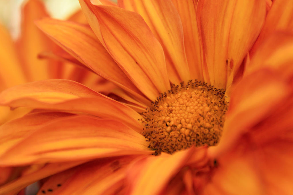 Orange by pengirl389265