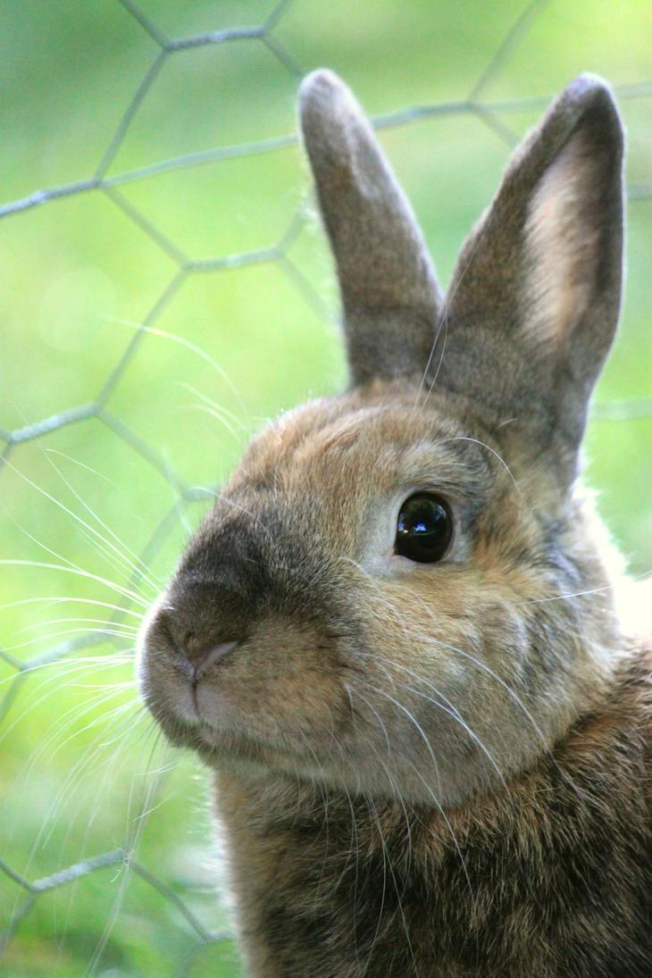 Rabbit by pengirl389265
