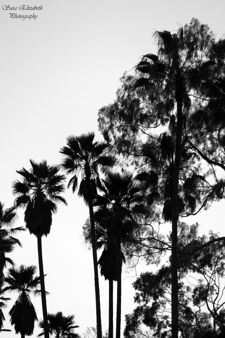 Black and White Palms by pengirl389265