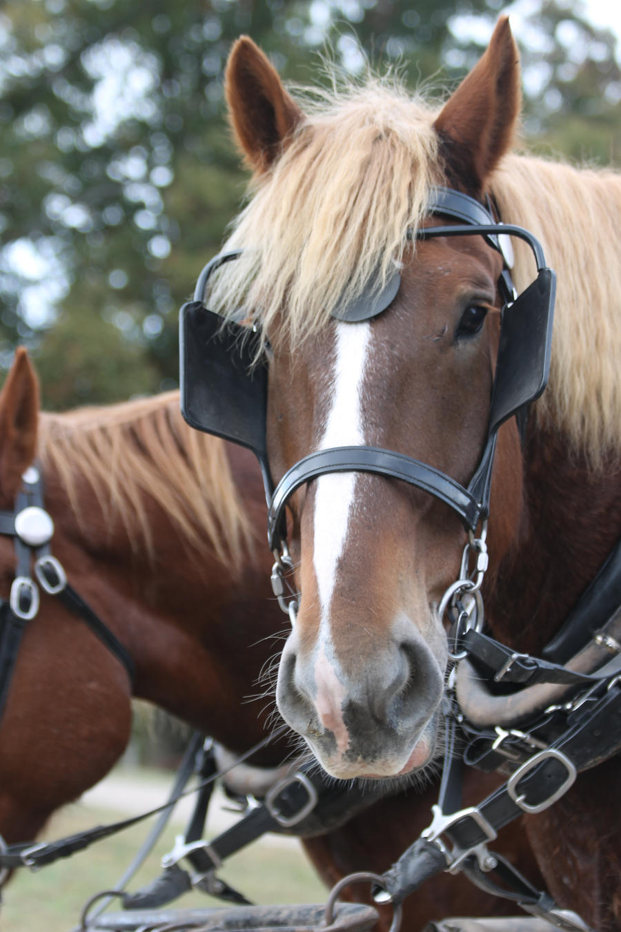 Horses II by eeyorefan