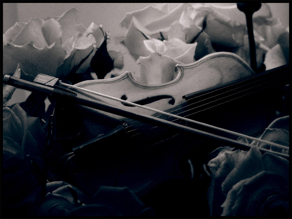 Violin by Dakann