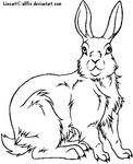 Rabbit lineart -Free to use-