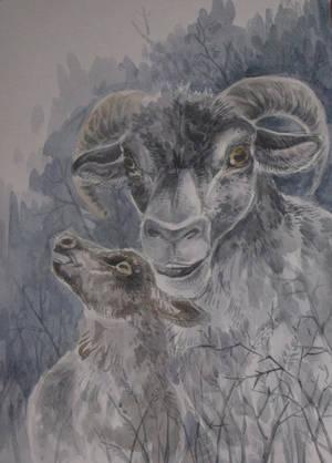 Sheep by Taski-Guru