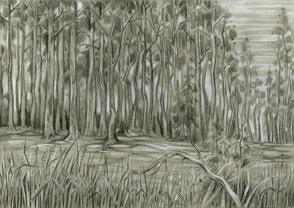 Pine Wood by Taski-Guru