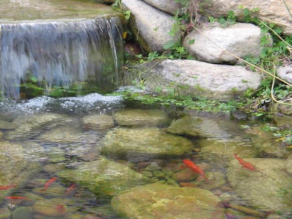 Fish pond by hazel almonds on deviantart for Garden pond reddit