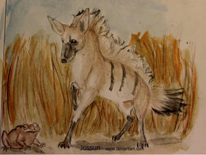 Aardwolf /Termit hyena and a toad