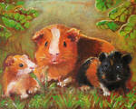 Guinea pigs in the mist