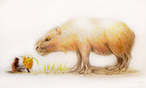 The Capybara and the Guineapig