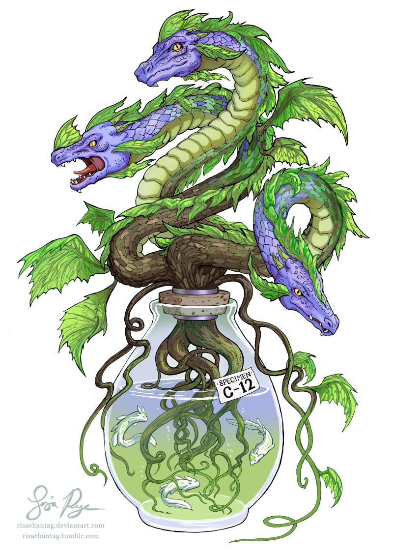 Hydrangea by Risachantag