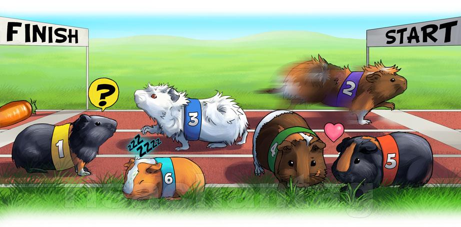Original: Guinea Pig Race