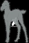 Kathri Foals