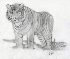 Tigre by LoiseFenollCreation