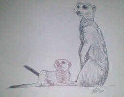 Suricate by LoiseFenollCreation