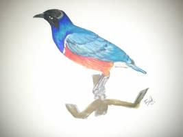 Oiseau by LoiseFenollCreation