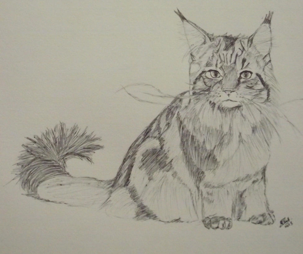 Speed Drawing of cat : Maine Coon by LoiseFenollCreation