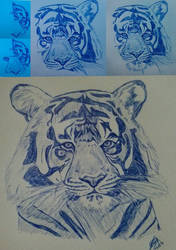 Tiger - step by step - only blue pen