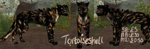 Tortoiseshell Cat Preset Auction