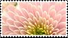 Flower stamp 2 by rarebeestjes