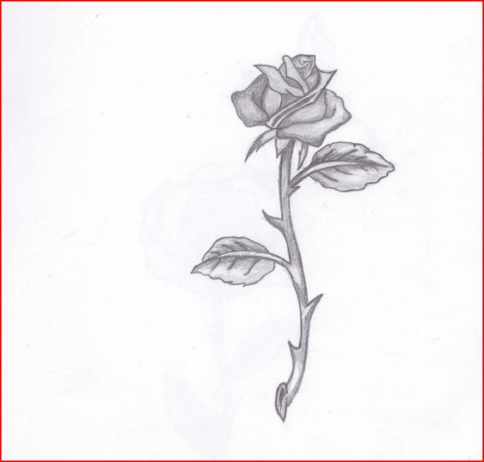 Rose 1 by lil-bones