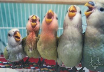 Choir by duranin