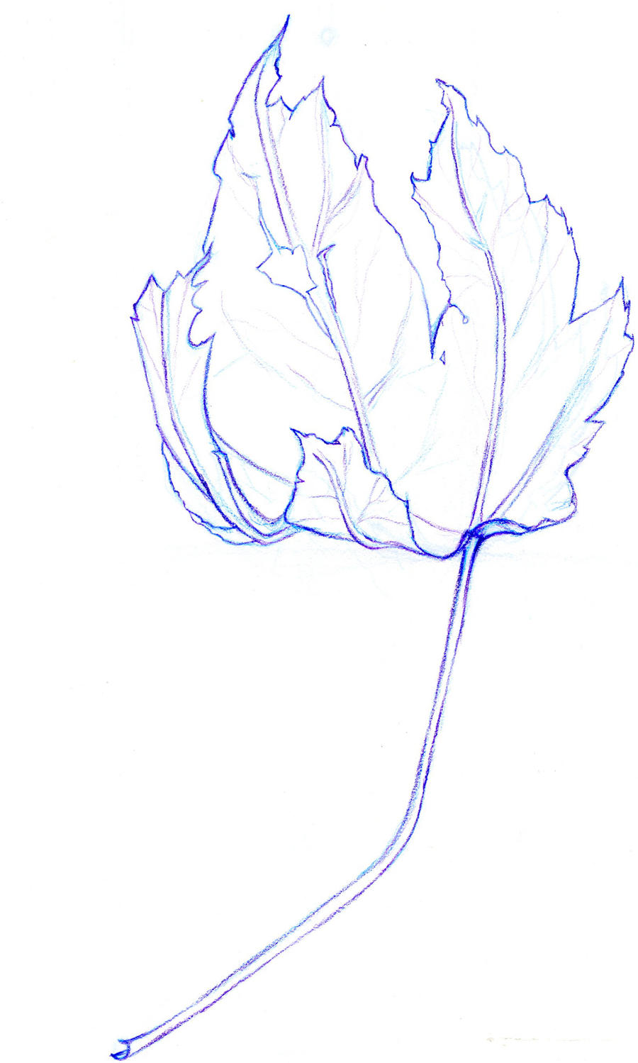 Contour Line Drawing Leaf : Contour line leaf by alexwhlr on deviantart