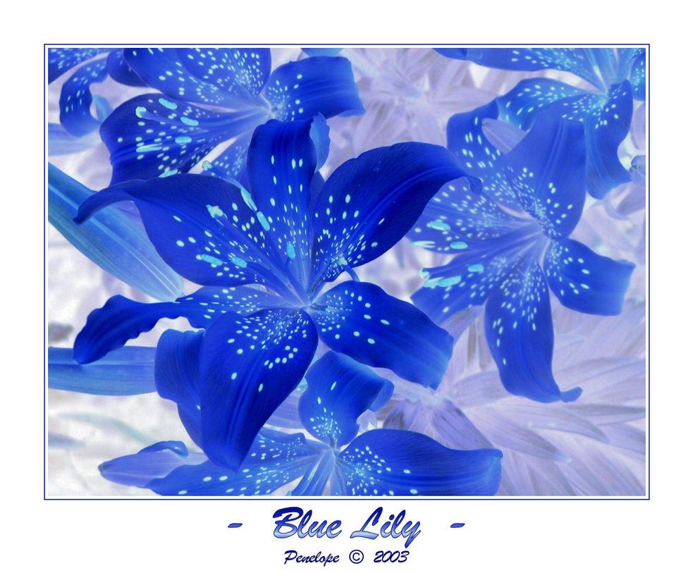 Blue lily by penelopew on deviantart blue lily by penelopew izmirmasajfo