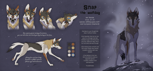 Snap the wolfdog reference sheet 2017