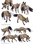 Smoky the vixen sketches