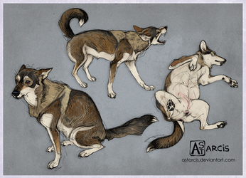 Sketches of Alpha the nervous dog by Astarcis