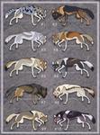Wolfdog adoptables CLOSED
