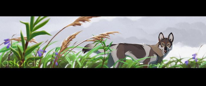 Grass field near the sea