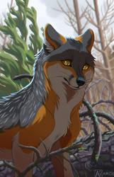Commission: FauxHawkFox 2