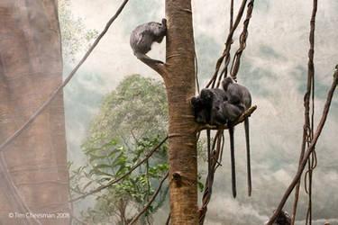 Monkey 01 by MrTim