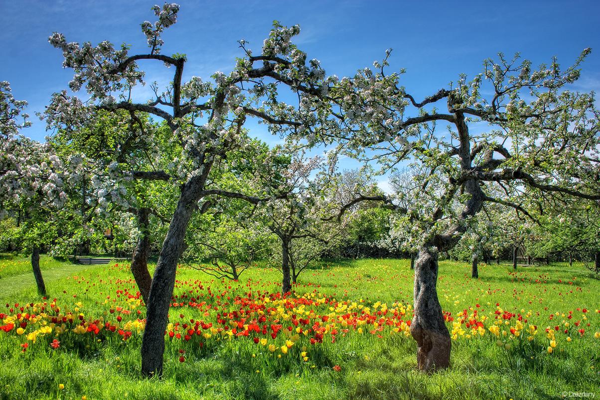 Floral diversity by Drezdany