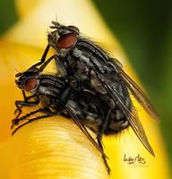 loving flies by Drezdany