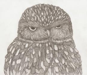 PRIZE - OwlRLY? by AsheEllwood