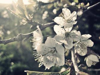 Spring smells by EvenInDeath96