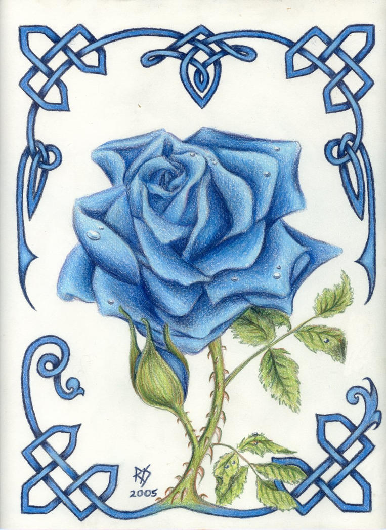 Blue Rose by robertsloan2