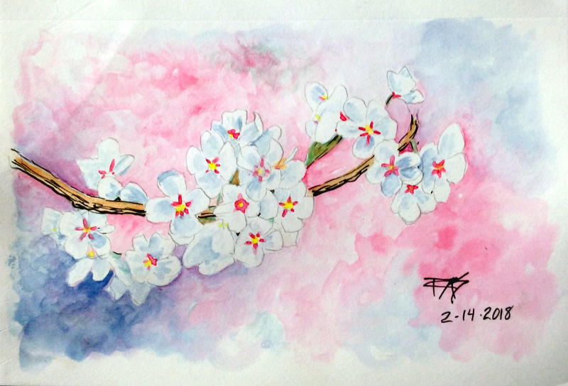 Cherry Blossoms by robertsloan2